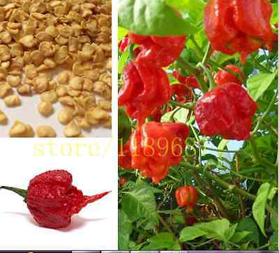 200+ Fresh CAROLINA REAPER PEPPER SEEDS /World's Hottest Pepper - Free Shipping
