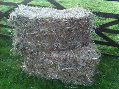 Small Bales Of Hay - Rye Grass Mix - Last Years & This Years Available