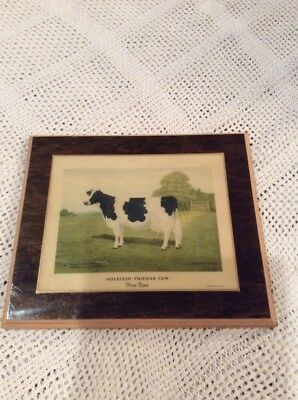 Rare Vintage Holstein Friesian Cow Litho Print Plaque Farming Cattle Collectible