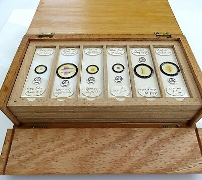 48 X Antique Microscope Slides By Watson & Sons Of London / In Wooden Case