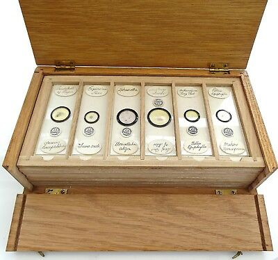 48 X Antique Microscope Slides By Watson & Sons Of London /slides In Wooden Case