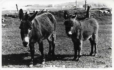 Mother & Daughter Donkeys published by J. McClafferty Carrigart RP