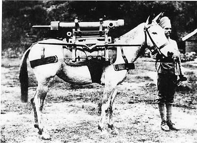 Indian Artillery Regiment Mule & Handler Photograph Military Army 1800's
