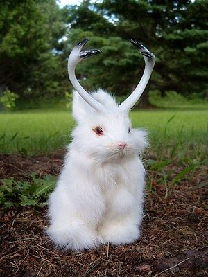Realistic JACKALOPE RABBIT Fur FURRY ANIMAL REPLICA toy 1800wh FREE SHIPPING USA