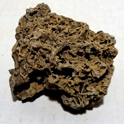 Fossil moss & shale rock chips in recent cold water tufa deposit EXCELLENT