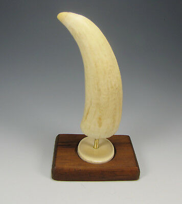Antique faux whale tooth walnut wood stand