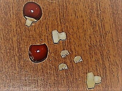 Lucky Elephants ( Three ) Tiny Elephants Inside A Capped Bean