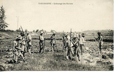 Carte Postale / Madagascar / Tananarive Labourage Des Rizieres