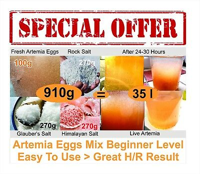 ARTEMIA EGGS MIX 95% hatch rate / Artemia eggs mix Beginner Level / AWSDEAL
