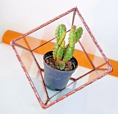 Terrarium Geometric Copper Stained Beautiful Glass With small hook for hanging