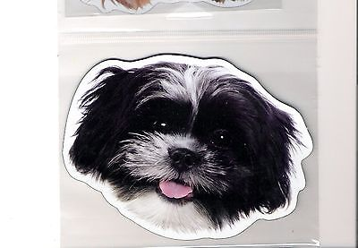 Shih Tzu Black and White 4 inch face magnet for car or anything metal     New