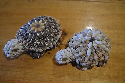 turtles made of sea shells-arts crafts