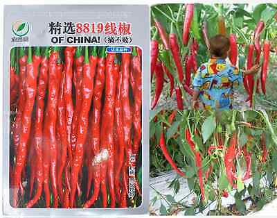 1 Bag Red Chili Hot Pepper Super Giant Long Seed Organic Seed Garden Planting