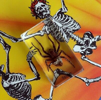 Real Insect Paperweight - Spider