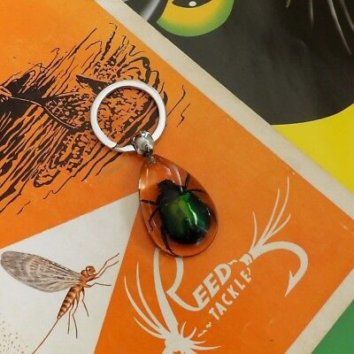 Real Insect Key Chain - Rutelian Beetle