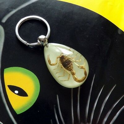 Real Insect Glow-in-the-Dark Key Chain - Brown Scorpion