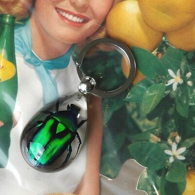 Real Insect Key Chain - Green Rose Chafer Beetle