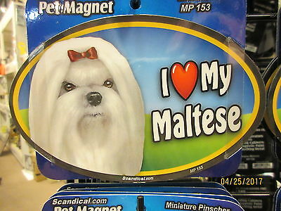 I Love My Maltese 6 inch oval magnet for car or anything metal  New