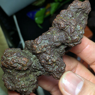 """Coprolite or Dinosaur POOPIES Fossil Poop Feces Poo Dung LARGE 4.0"""" 101mm A670"""