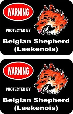 2 protected by Belgian Shepherd (Laekenois) dog home window vinyl stickers #C