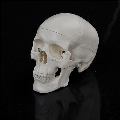 Teaching Mini Skull Human Anatomical Anatomy Head Medical Model Convenient ME