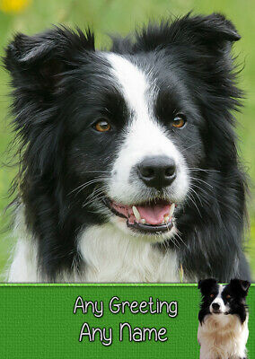 Personalised Border Collie Dog High Quality Greeting Card  Birthday Any Occasion