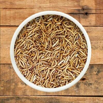 4 kg Dried Mealworms, Best Quality at Best Price, Wild Bird Food, Dried Mealworm