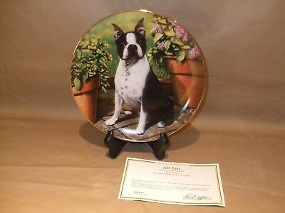 Danbury Mint Boston Terrier Plate  All Ears