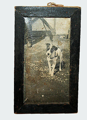 Sweet Antique Photo of Dog Jack Russell Terrier in Wood Frame - As Found