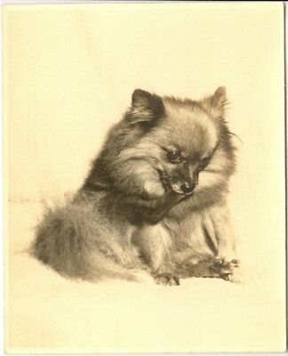 Vintage Sepia Postcard Adorable Pomeranian Puppy Matted Ready For Framing