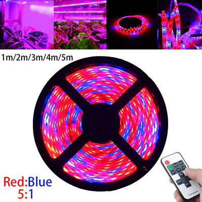 Full Spectrum LED Grow Light Strip Lamp Blue Red 5:1 Hydroponic Greenhouse Plant