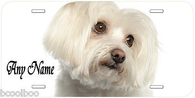 Maltese Dog Any Text Personalized Novelty Car License Plate A1