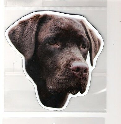 Chocolate Labrador 4 inch face magnet for car or anything metal     New