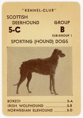 1939 rare AKC Dog Card SCOTTISH DEERHOUND  -  Hunting dog Kennel-Club Setter