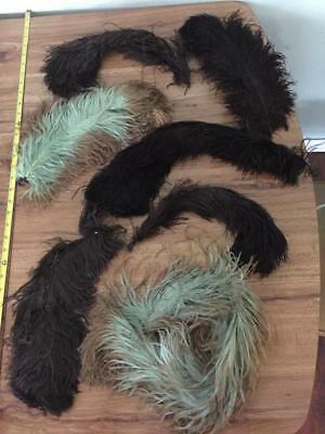 Lot of Antique Millinery Feathers / Plumes & Feather Collar Ostrich  NR
