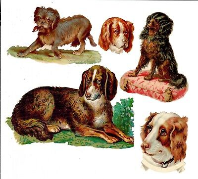 Five various1880s Dog Scraps. Germany. Collie, Spaniel, German Shepherd