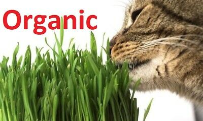 1kg Sweet Organic Oat Grass seeds  for Cats and other Pets