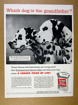 1957 grandson & grandfather Dalmatian dog photo Gaines Dog Food vintage print Ad