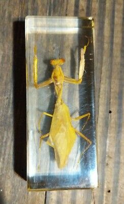 Praying Mantis Paperweight Insect Specimen in Clear Lucite Acrylic