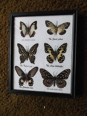 Real 6 Mix Butterfly Taxidermy Rare Frame Display Mounted Insect Collection