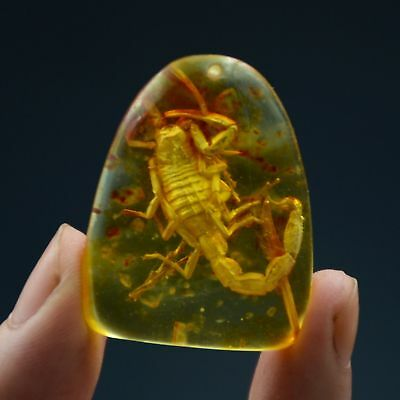 Fossil Scorpion Natural Burmite Amber 100 million years old (Untreated)33.52ct