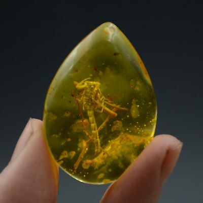 Fossil Scorpion Natural Burmite Amber 100 million years old (Untreated)41.37ct