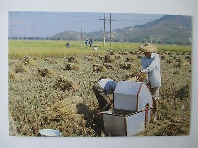 Postcard China Chinese Farmers Machine Helping With Brown Rice