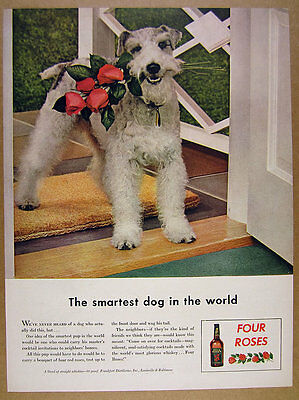 1943 wire fox terrier dog photo Four Roses Whiskey vintage print Ad