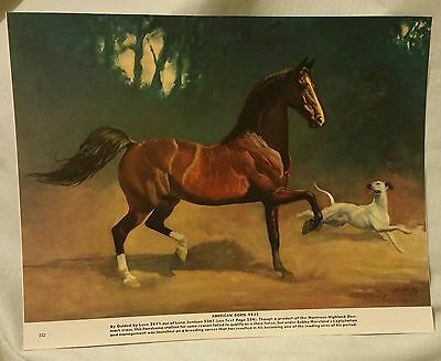 American Born Saddlebred Horse Rooster George Ford Morris 1952 Print New Cond.