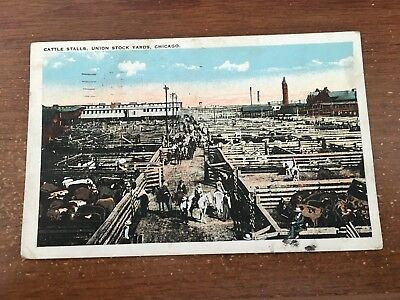 Chicago IL Illinois Union Stock yards Cattle pens pc 1924