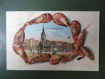 Vintage Postcard PPC, Brighton Aquarium Novelty Embossed Prawns Seafood