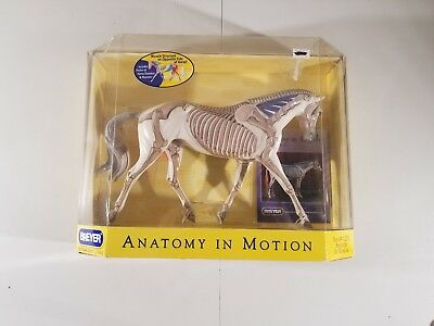Breyer Traditional - Strapless - HORSE Anatomy In Motion - New Open Box