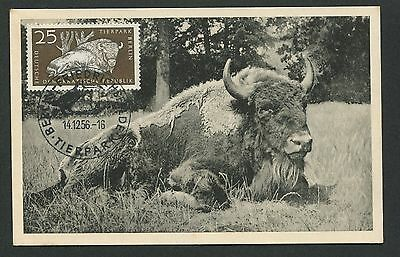 DDR MK 1956 TIERPARK BERLIN WISENT BISON MAXIMUMKARTE MAXIMUM CARD MC CM d4917