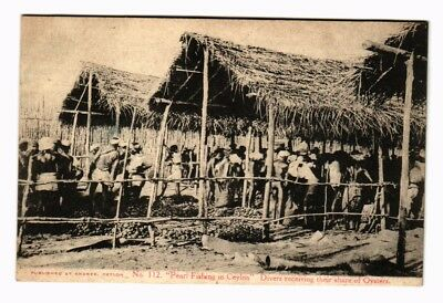c1905 PPC Pearl Fishing in Ceylon Divers receiving share of Oysters